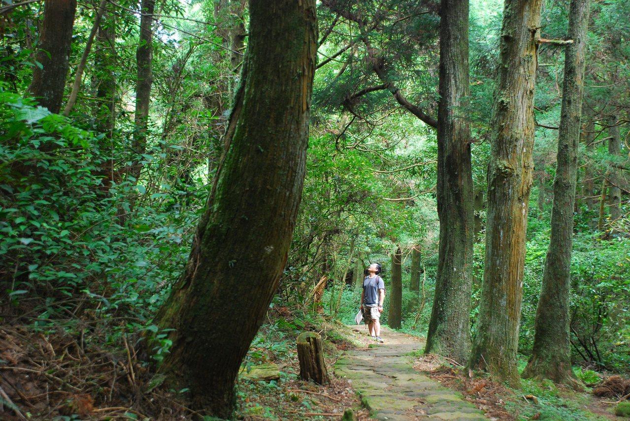 頂山石梯嶺步道上的一段幽靜森林。 圖/王迦嵐