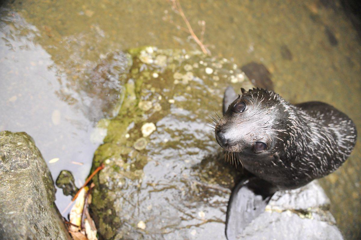 遇到難得一見的海豹寶寶 Ohau Stream小海豹托兒所 | 旅遊