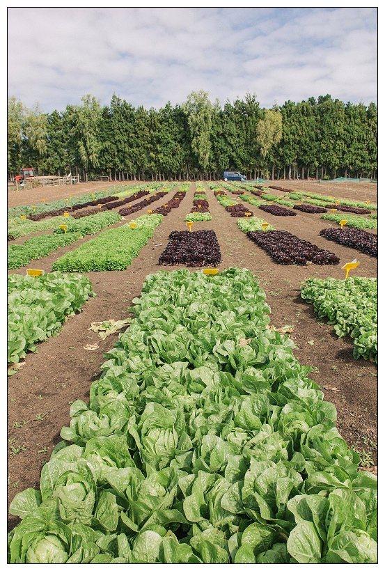 紐西蘭打工度假 採莓採果外你應該知道的農場工作 | 旅遊 | 聯合新聞網
