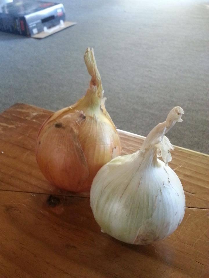 紐西蘭打工度假 蔬果農場的每一天都非常精彩 | 旅遊 | 聯合新聞網