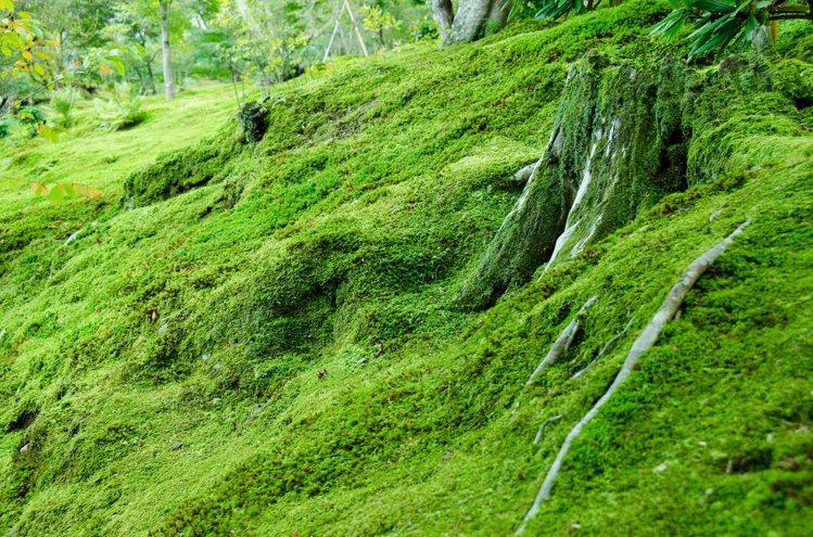 《美國國家科學院學報》(PNAS)15日報導,是謙卑貼地卻無比偉大的苔蘚為地球帶...