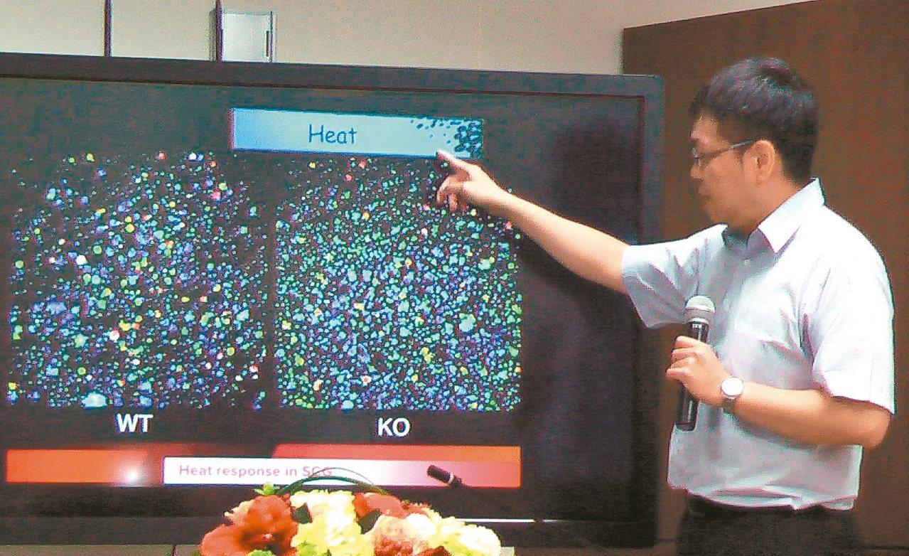 高醫大附設醫院神經科主治醫師譚俊祥研究發現,對溫熱具性的離子通道是Trpm2基因...