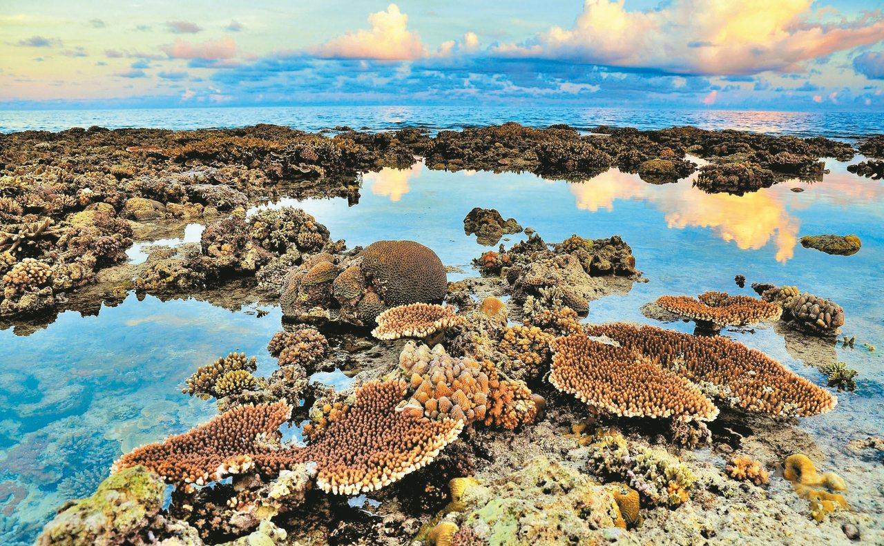 太平島退潮時絢麗奪目的珊瑚浮現。 圖/侯建安提供