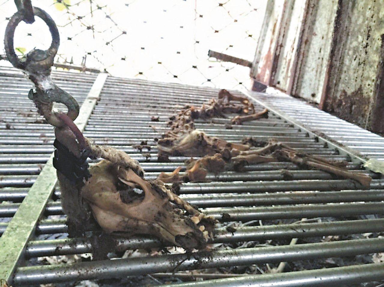 動保處去年12月查獲非法繁殖場,負責人吳朝權涉嫌虐待動物致死,但因證據不足不起訴...