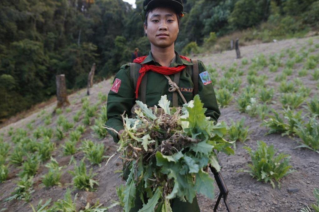 當一塊毒田被政府軍銷毀後,另一塊又從山坡角落叢生,撣邦的老百姓彷如掉進毒品與生計...