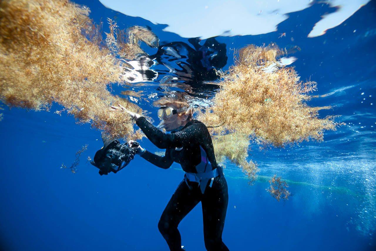 席薇亚.厄尔在2010年执行以探索并保护海洋为宗旨的「蓝色任务」期间, 于百慕达...