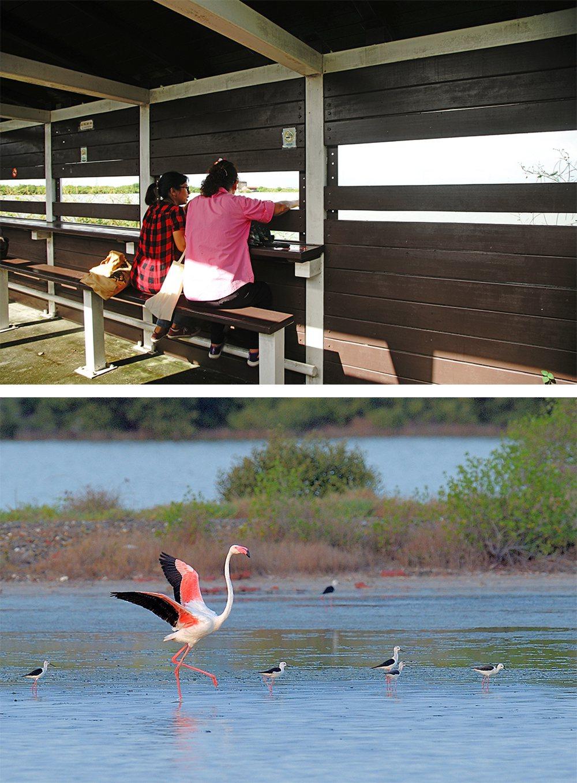 (上)永达路、盐保路两地皆设有赏鸟亭。(摄影/曾信耀)(下)被喻为「候鸟界名模」...