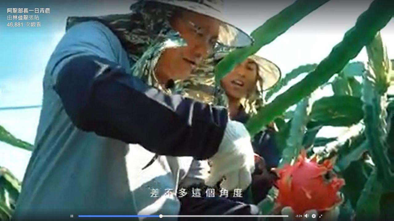 交通部长林佳龙挑战「一日青农」,到彰化二林跟返乡果农学习采收红龙果,帮忙小农营销...