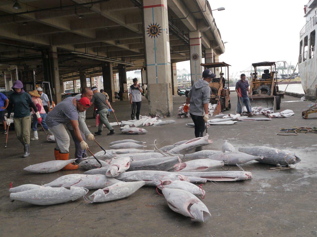 高雄是远洋渔业重要基地,远洋渔船返回前镇渔港,渔工们正在搬运冷冻鲔鱼。记者徐白樱...