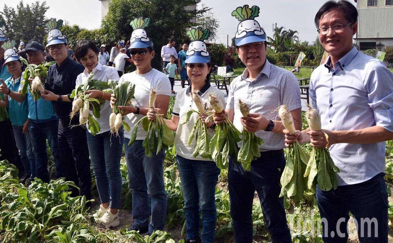 高雄美浓白玉萝卜与好豆季今天开锣。记者王昭月/摄影