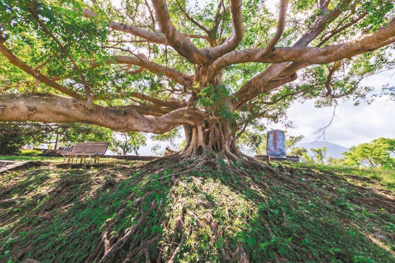 砲台山上的老榕樹枝繁葉茂,民眾可坐在底下休憩。 圖/蘇澳鎮公所提供