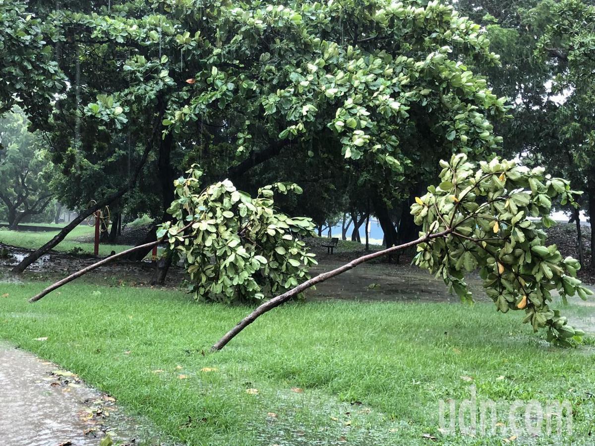 府平公園內的樹木被大風颳到彎腰。