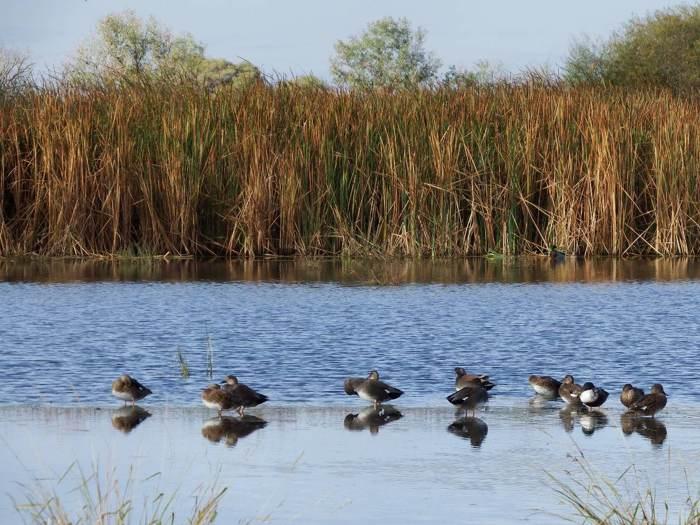在國家級保護區中賞鳥