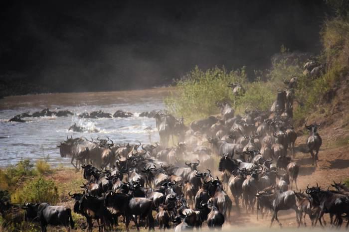 天國之渡動物過河壯觀景象