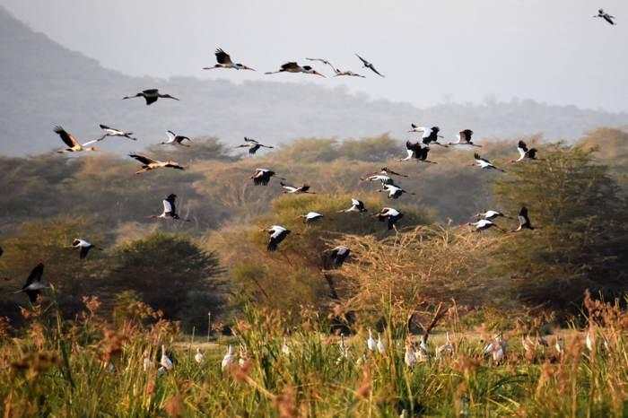 曼雅拉湖成千上萬的飛鳥