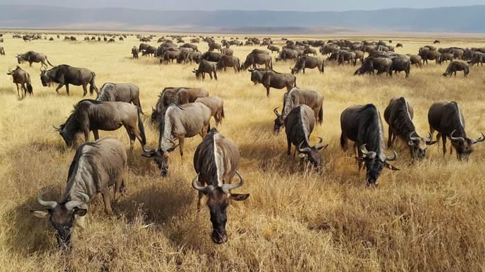 動物大遷徙壯觀景象