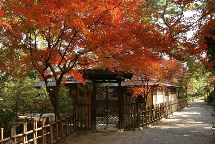 迷走神戶四國◆遇見楓紅與藝術