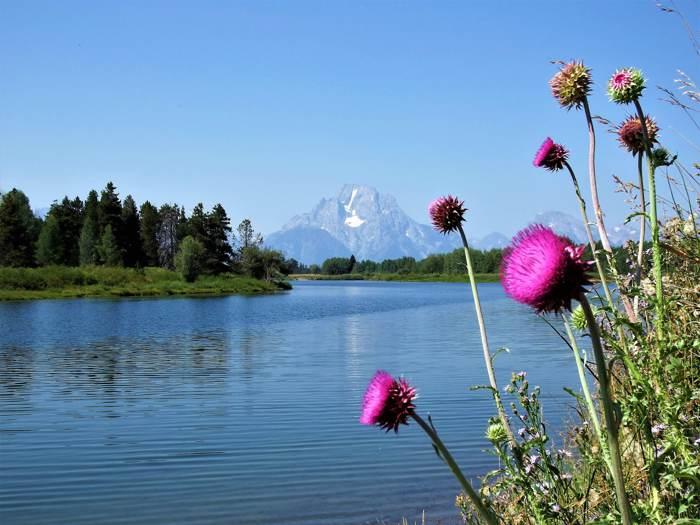 黃石國家公園◆大堤頓國家公園◆深度慢活遊 Sep.