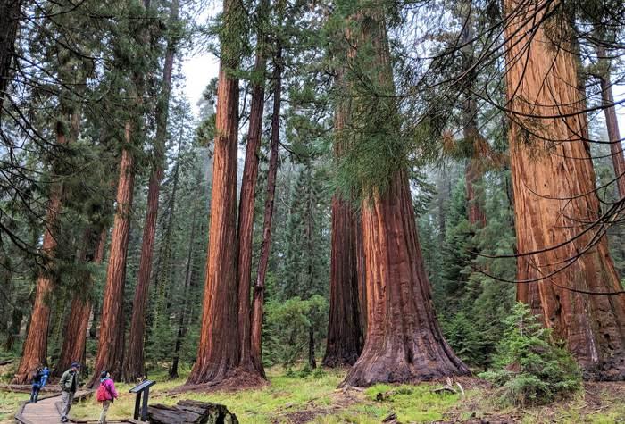 【舊金山生態慢活遊】優勝美地◆巨杉◆加州國王谷~三大國家公園慢活之旅~Oct.