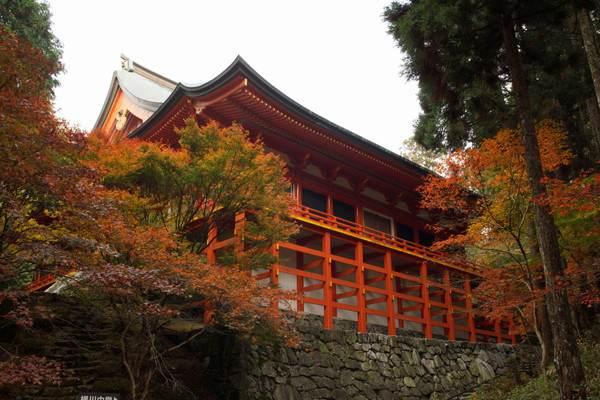 和歌山楓紅季。宿坊世界遺產澄靜心靈之旅