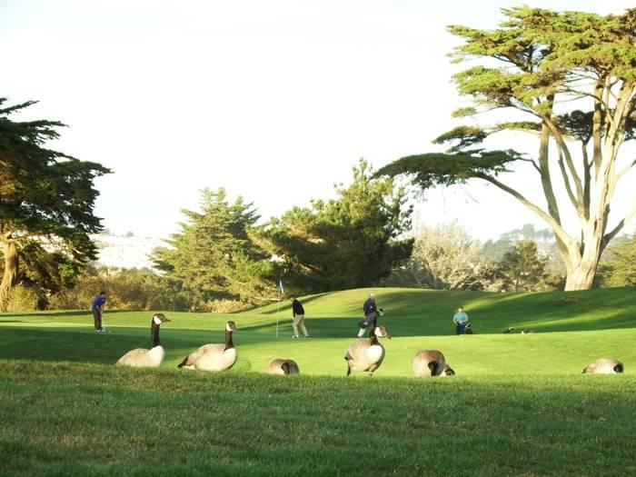 美國圓石灘高爾夫圓夢之旅。直擊2020 PGA錦標賽事