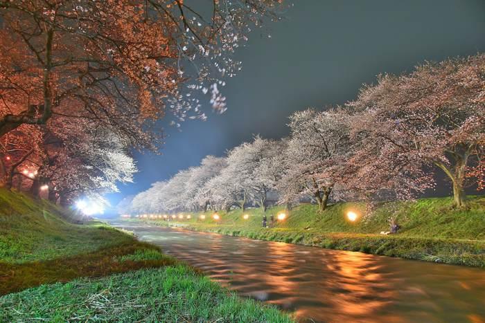 北陸春櫻協奏曲。富山深度慢活遊