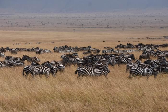 動物大遷徙