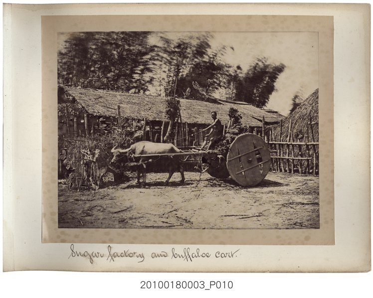 約1870年代所拍攝的照片。照片裡是用來載運甘蔗的板輪牛車。(館藏號2010.0...