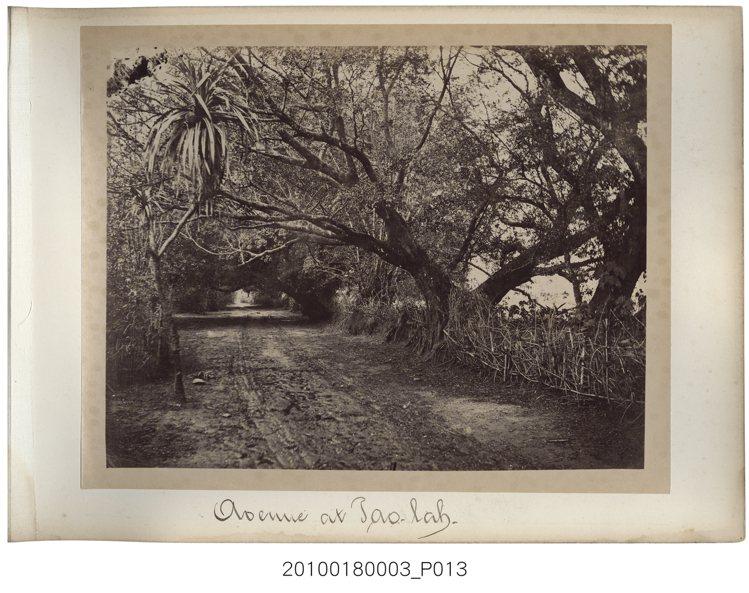 約1870年代所拍攝臺灣鄉間的照片。照片裡路的中間有二道牛車板輪行走過的痕跡,可...