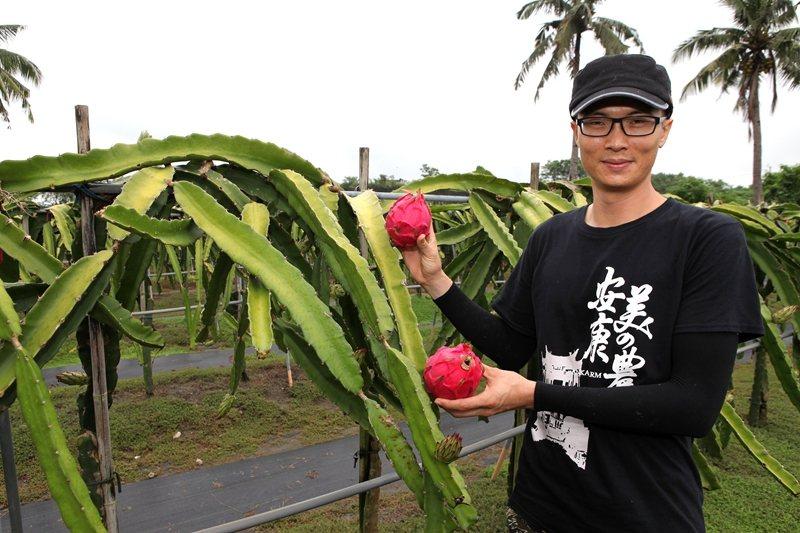高雄市型農林智樑在美濃故鄉成功栽植火龍果。