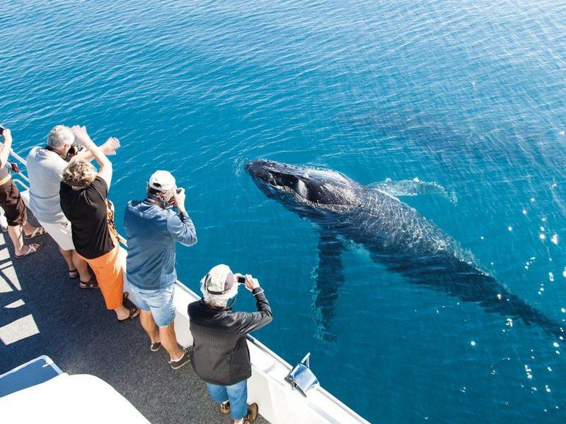 昆士蘭的春季正是到荷維灣近距離賞鯨的好時節。圖/澳洲昆士蘭州旅遊暨活動推廣局提供