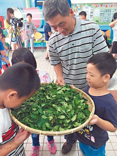 在地茶農李宗烈(中)是校友,前天回母校指導小朋友採茶、製茶。 圖/乾華國小提供
