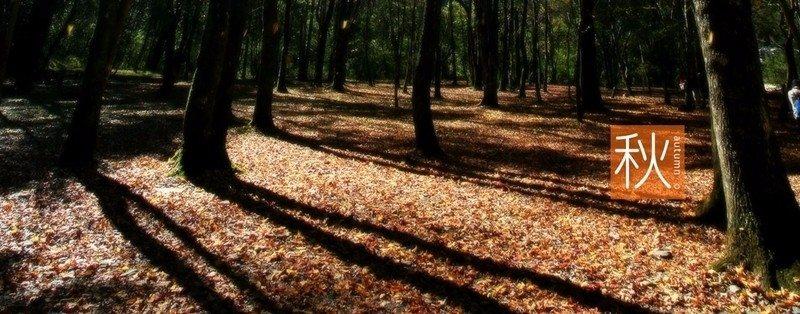圖片來源/奧萬大森林遊樂區官網