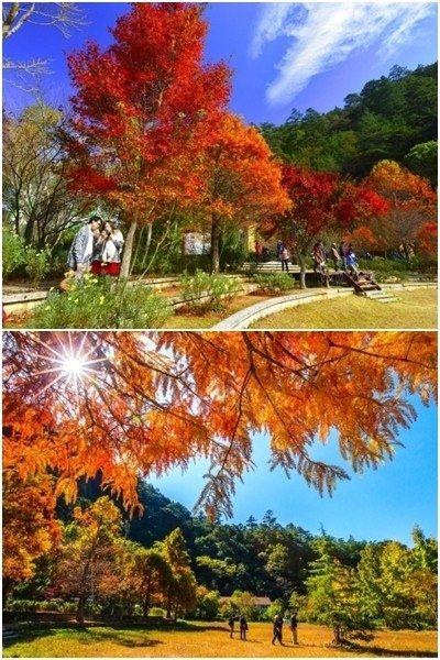 圖片來源/武陵農場官網