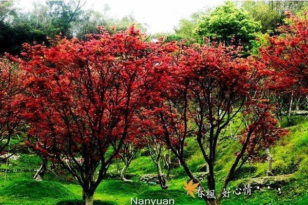 圖片來源/南元花園官網