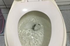 衛生紙丟馬桶「面紙」可以嗎?環團這樣說
