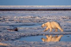北極氣溫創新高 冰雪留不住也來不了