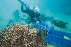 墾丁落難珊瑚 核3廠水域療養