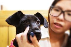 給毛小孩一個家!哈哈窩寵物精品館領養贈千元購物金