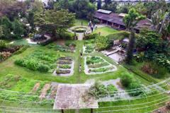 屏東柚園復育水生螢火蟲 成功關鍵是這樣東西…