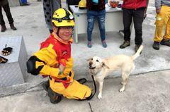 45秒完成搜索測驗 台南搜救犬通國際E級認證