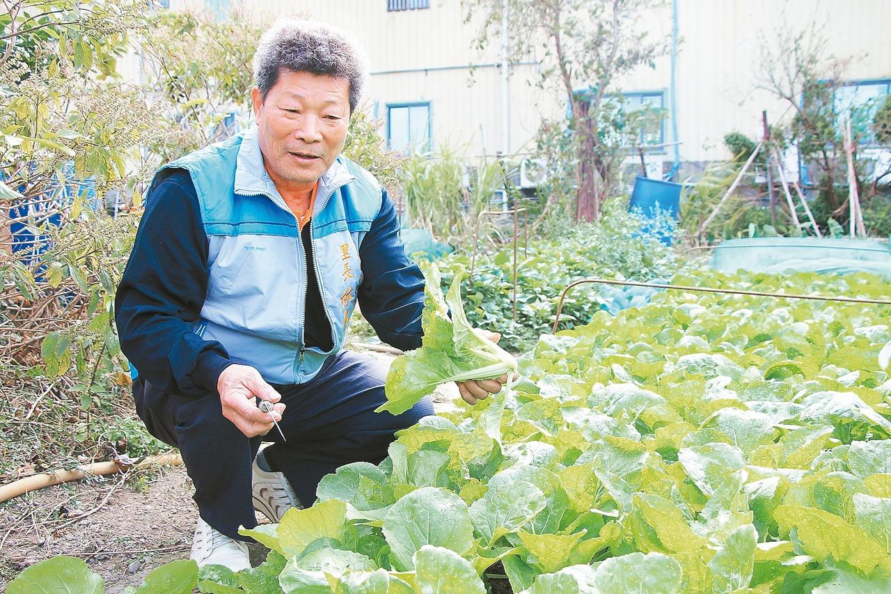 鶯歌農三代千坪地 免費讓人種蔬果