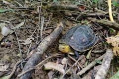 養龜20年不識保育龜?法官覺得很合理