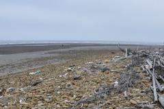 曾是海水浴場的崎頂沙灘堆積大量垃圾 無人聞問