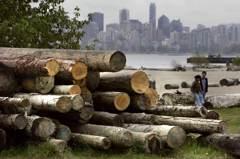 川普掀起軟木貿易戰 加拿大向中國靠攏