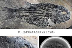 雲南發現逾2億年化石 命名三疊復興魚