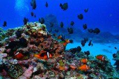 春末夏初季節限定!「潛」進綠島看珊瑚寶寶