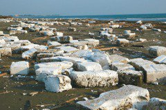 沙灘上飄雪 蚵棚變海灘夢魘