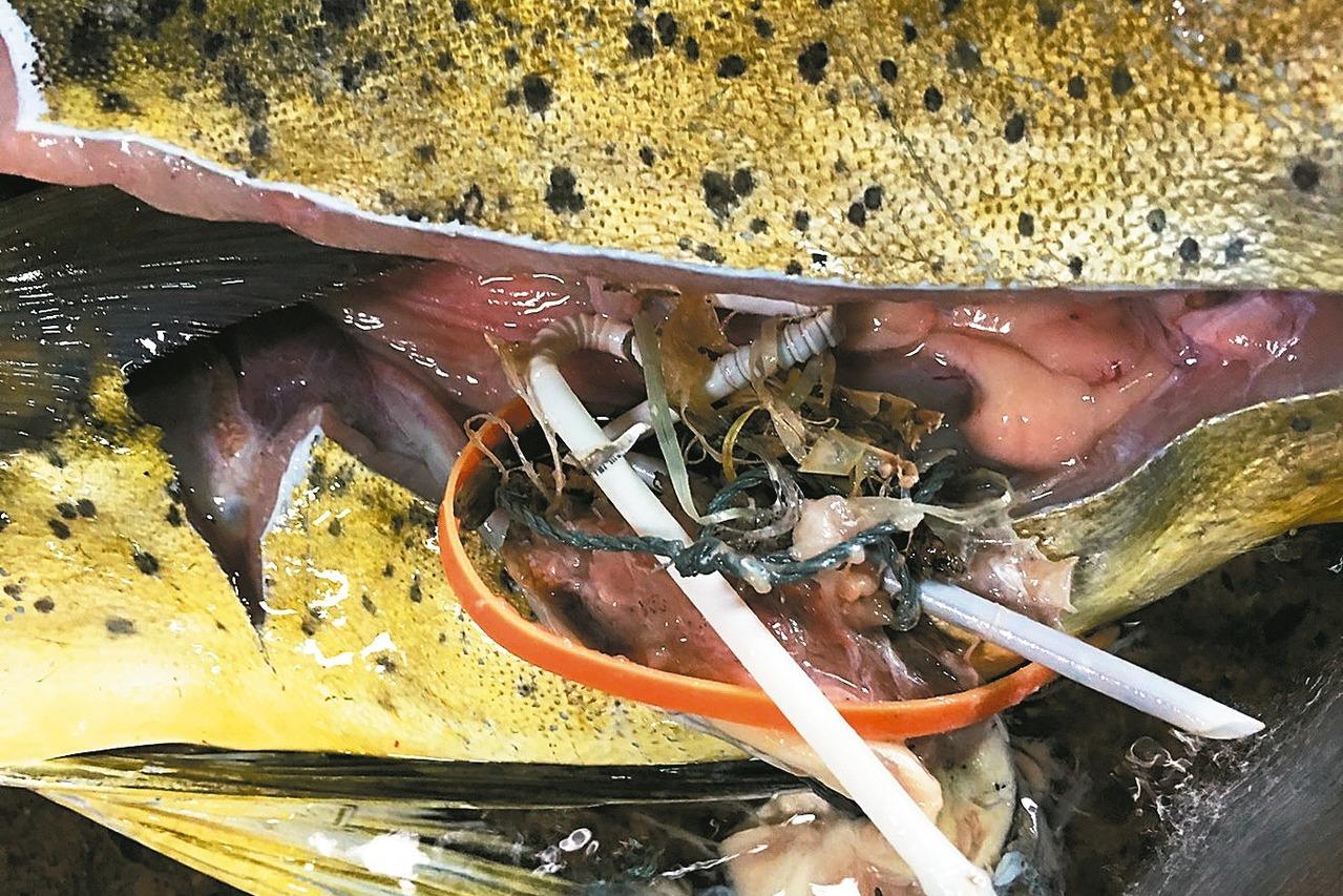 那一碗令人的驚駭塑膠濃湯 海洋正熬給我們喝