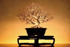 迷你又迷人! 收集來自全日本佳作的大宮盆栽美術館
